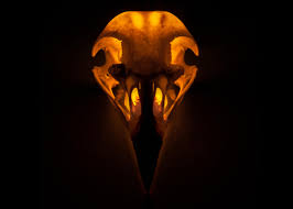 skull binding bird photos audubon