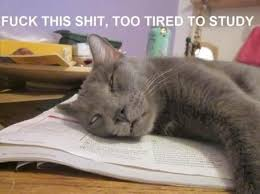 Tired Cat Meme - image result for tired motivation memes funny cats and more