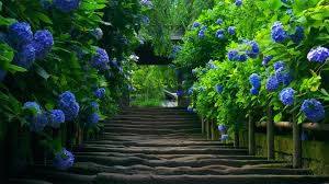 most beautiful nature wallpaper in the world mojmalnews com