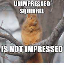 Unimpressed Meme - unimpressed squirrel is not impressed squirrel meme on me me