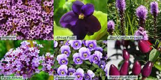 popular purple flowers blooms today