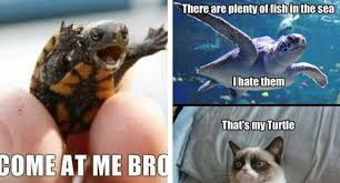 Come At Me Meme - 29 hilarious turtle memes that are so funny they re actually dangerous