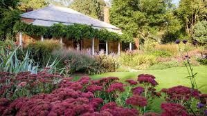 Heat Resistant Plants Homelife 5 Colourful Heat Tolerant Plants