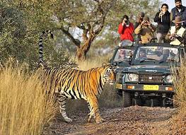 wildlife tours images Vacationer india wildlife tours in india jpg