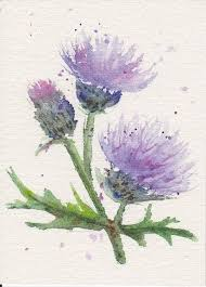 thistle atc 2 watercolor pencils watercolor and scottish thistle