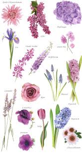 Spring Flower Pictures Flower Names By Color Flower Flowers And Gardens
