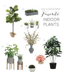 Silk Plants Direct Jade Plant Tips For Decorating With Real And Faux Plants House Of Jade