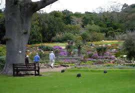 Kirstenbosch Botanical Gardens Kirstenbosch National Botanical Garden