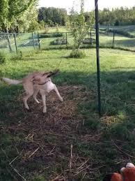 Dog Backyard Playground by 90 Best Doggie Yards Images On Pinterest Dog Playground Dog