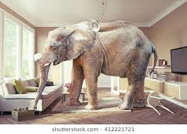 elephant in the living room elephant in the room images stock photos vectors shutterstock