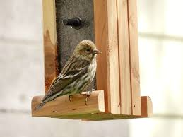 finches fizzynotions