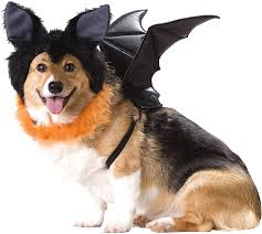 california costumes bat dog costume large chewy com