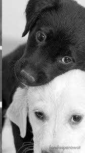 imagenes de animales whatsapp fondos para whatsapp 5 fondos de whatsapp de animales tiernos