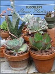 succulent house plants add some succulents to your house plant