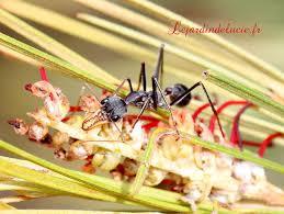 cr馥r mon livre de cuisine cr馥r cuisine 100 images cr馥r cuisine 100 images 酷給樂優惠