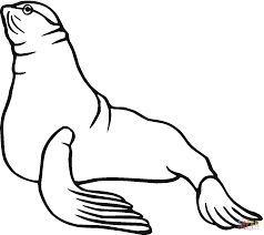 seal 4 coloring page free printable coloring pages