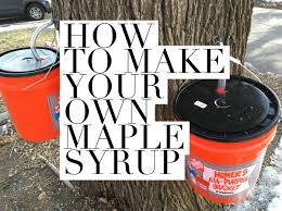 Backyard Maple Syrup by How To Make Maple Syrup In Your Own Backyard U2013 Dan330