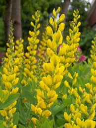 native drought tolerant plants high and dry state by state gardening
