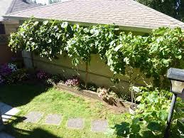 properties maple ridge real estate