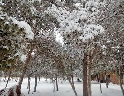 snowfall in the sahara desert january 20th 2017 snow in the