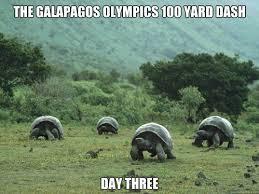 Turtle Meme - post 5446 justpost virtually entertaining