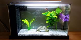 Beta Fish In Vase Do Betta Fish Need A Filter Bettafish Org