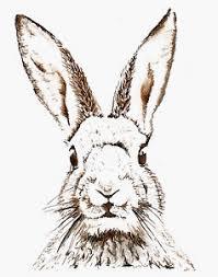 rabbit poster vintage print poster rabbit hare large drawing for glass frame
