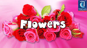 learn names of flowers flower names in animation video