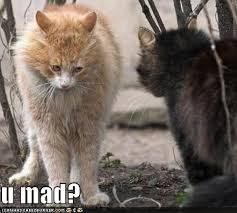 Are You Mad At Me Meme - 98 best funny kittehs images on pinterest funny animals funny