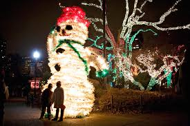 Zoo Lights Hours Chicago by Fall In Love With Chicago Through Chicago Trolley U0027s Holiday Lights