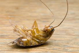 common types of bugs in apartments ehow