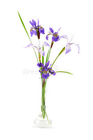 purple iris flowers in a small glass vase stock photo image