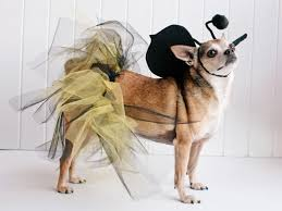 18 diy pet costumes for halloween hgtv