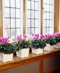 plante dans la chambre quelle plante pour quelle pièce de votre intérieur