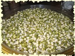 comment cuisiner les pousses de soja faire germer le soja ma nature 2