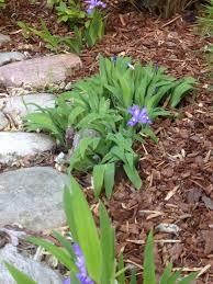 tennessee native plants category native plants backyard bounty