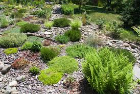 rock garden plants