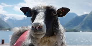 sheepwithaview official travel guide to norway visitnorway com