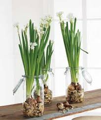 How To Grow A Bulb In A Vase How To Force Bulbs Into Bloom Real Simple