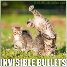Invisible Cat Meme - cats from a casino blog crazy jack wild casino stuffcrazy jack