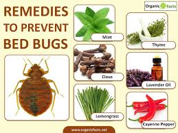 How To Avoid Bed Bugs 12 Surprising Home Remedies To Prevent Bed Bugs Organic Facts