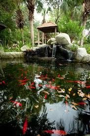 the 25 best goldfish pond ideas on pinterest water pond pond