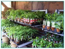 indoor vegetable gardening supplies