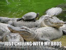 Funny Turtle Memes - irti funny picture 8289 tags alligator snapping turtle