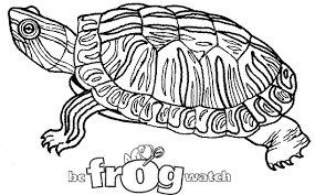 frogwatch program u2013 environment u2013 province british columbia