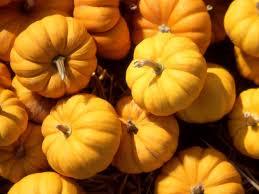 autumn pumpkin wallpaper fall desktop wallpapers with pumpkins best wallpaper background