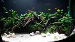 Aquascape Filter Planted Tank Anubias Garden By Brian Murphy Aquarium Design