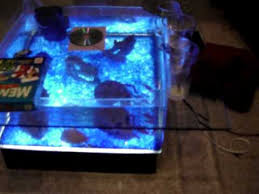 Aquarium Coffee Table Coffee Table Fish Tank And My 6 Foot Oscar Tank