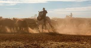 horseback mustering australian cattle station outback station