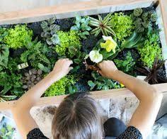 more than 10 awe some diy terrariums diy terrarium terraria and